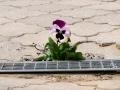 Pokusn+í kvetina (detail).jpg