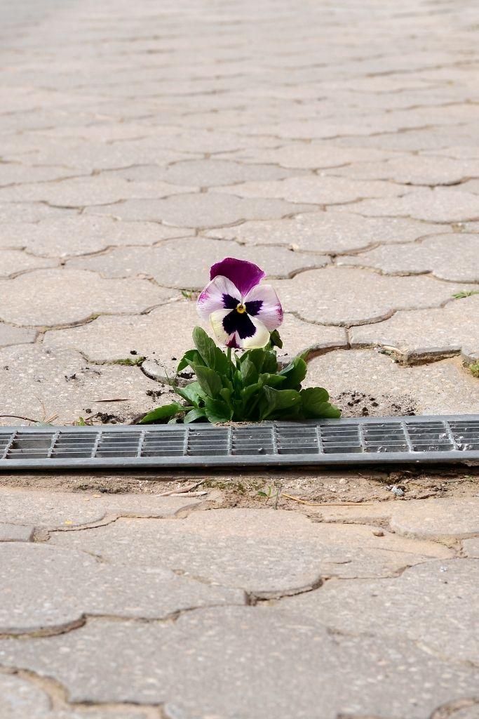 Pokusn+í kvetina (detail)